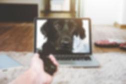 Canva - Macbook Pro Displaying Black Adu