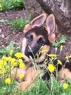 Puppy PIPER