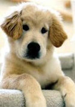 HOPE - Puppy