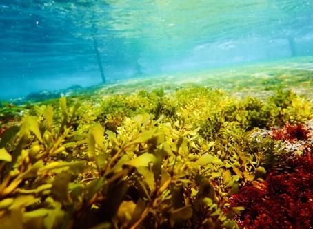 伊豆でダイビング😊4/4(土)海藻が少しずつ生え始めています🌱