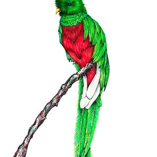 Un-Quetzal.jpg