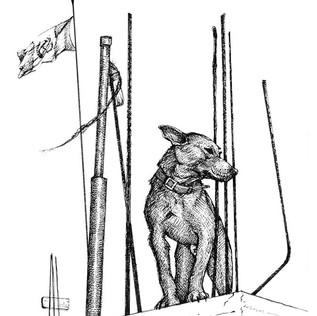 perro-bandera-sharp.jpg