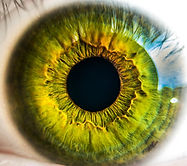 anatomy-biology-eye-8588 (1).jpg