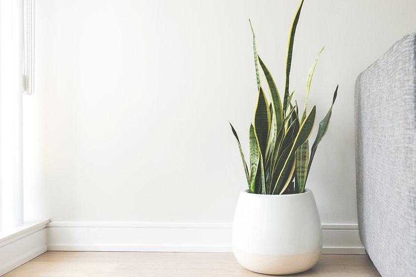 house-plant-in-white-pot.jpg