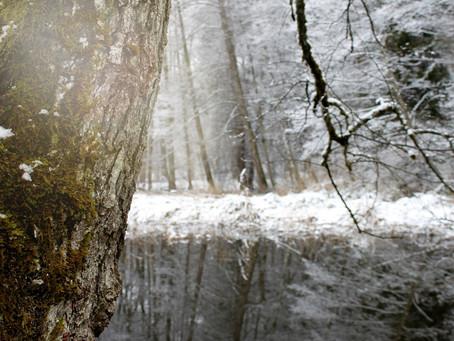 Stille im Winterwald