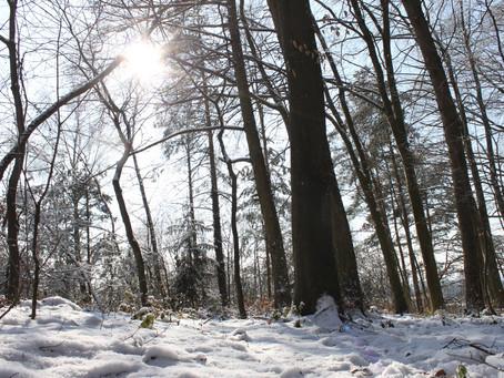Nur das Rieseln des Schnees..