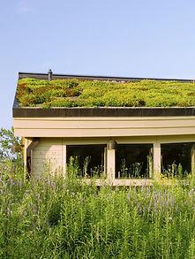 Dachbegrünung - Gründach