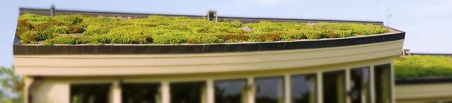 Extenisve und Intensive Dachbegrünung