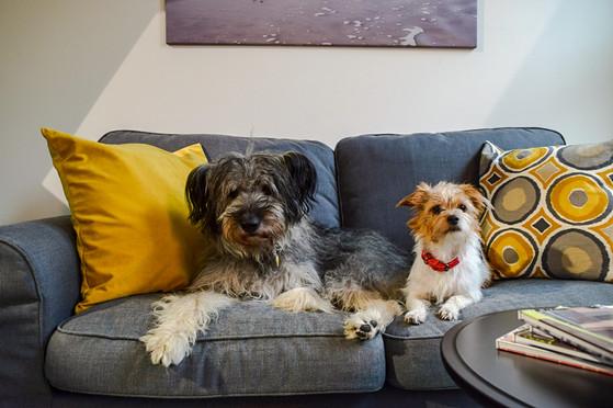 Auch unsere Bürohunde fühlen sich in unserer Fensterausstellung wohl
