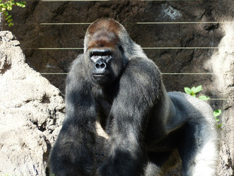 Harambe, Parenting, and Being in Control: Reflections on Human Limitations