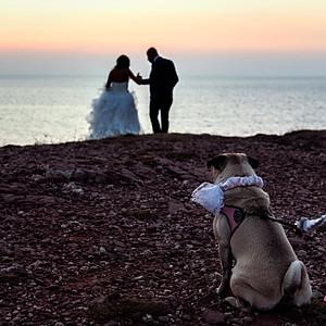Wedding Dog Sitting