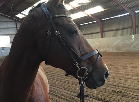 Køb af hest – hvad skal du overveje?