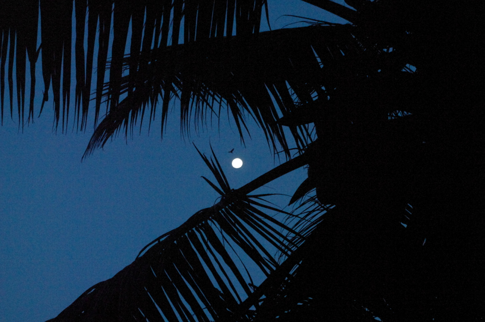 Nightime in papaya seychelles