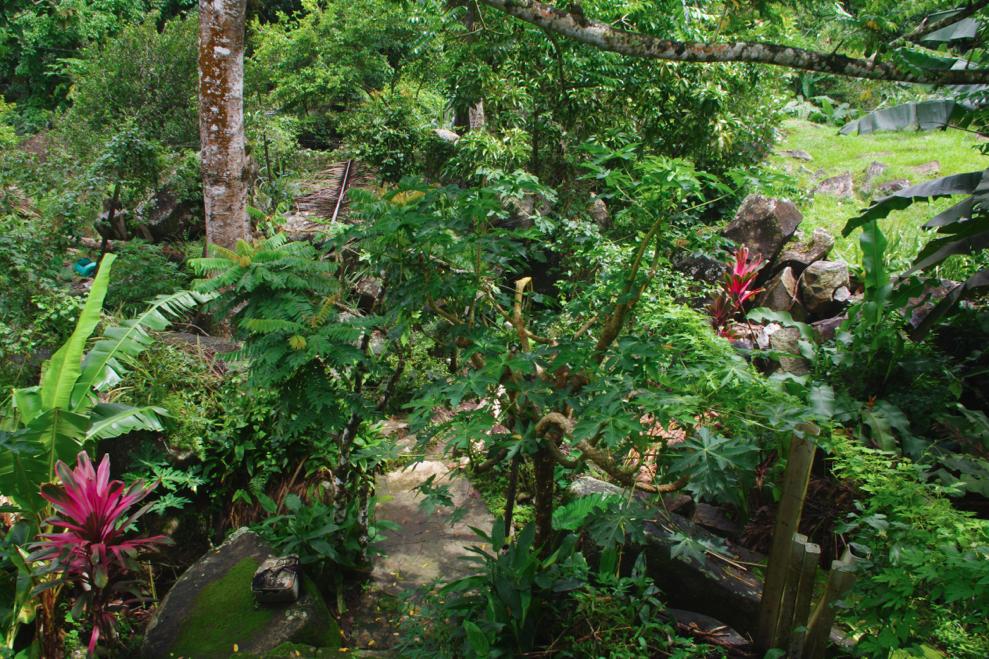 Jungle back garden