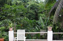 papaya seychelles guesthouse terrace