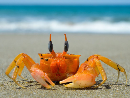 Le crabe et la marée