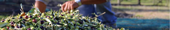 bandeau olives.jpg