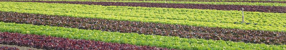 bandeau salades.jpg