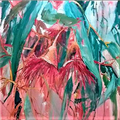 Flowering Gum in Pink