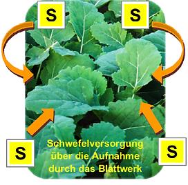 03_Schwefelwert850_01-2019_pdf__1_Seite_