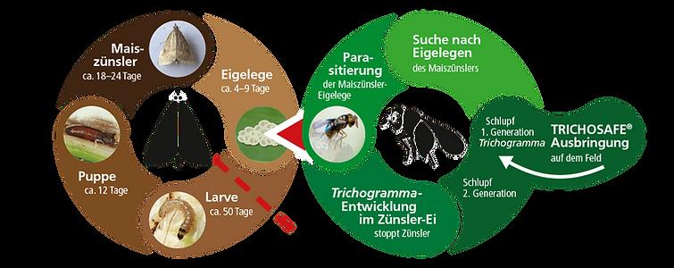 Biocare_wirkprinzip_2.png