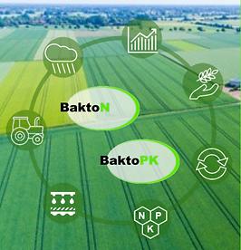BaktoN undBaktoPK Kreislauf anhand bildlicher Darstellung