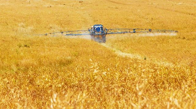 Duengen der Getreidefelder