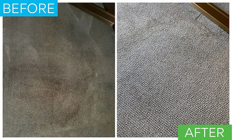 Before and after picture of a carpet had a really dark brown stain and after stain removal is restored.