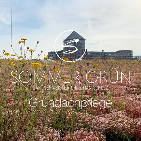 GründachpflegeSommer Grün - Gärtnermeister Christian Schulz ihr Landschaftsgärtner in Halle (Westfalen)