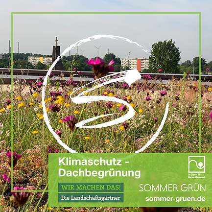 Dachbegrünung- Sommer GrünSommer Grün GmbH, Naturpool, Kreis Gütersloh, Gärtner, Gartenlandschaftsbau