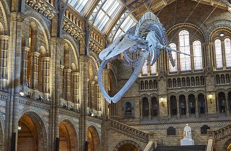 Natural History Museum.jpg