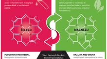 Tekoči klorofil - sorodnik krvi