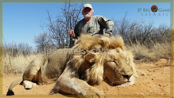 Tom Lion watermark 1 of 1-1051.jpeg