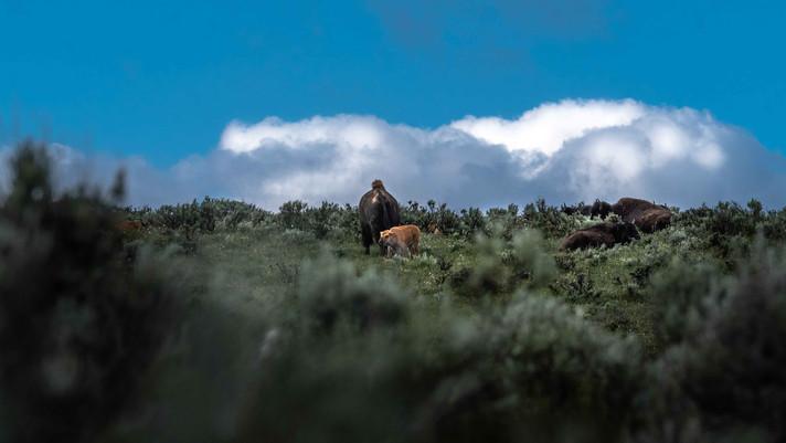 Tis' a dream incarnate: Yellowstone National Park