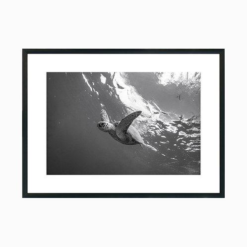 Underwater Flight at Oahu
