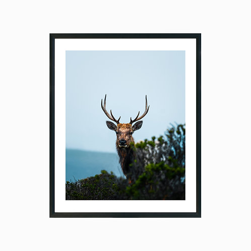 Elks of Tomales Point