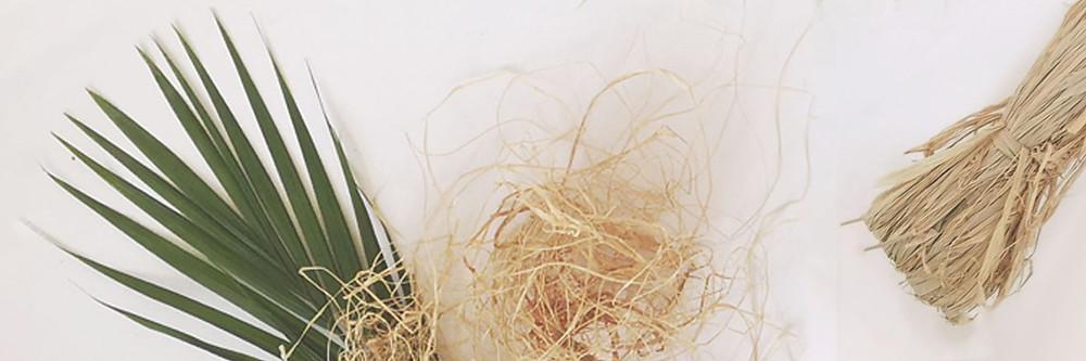 raffia palm leaf, raffia strands and bundle on a neutral backdrop