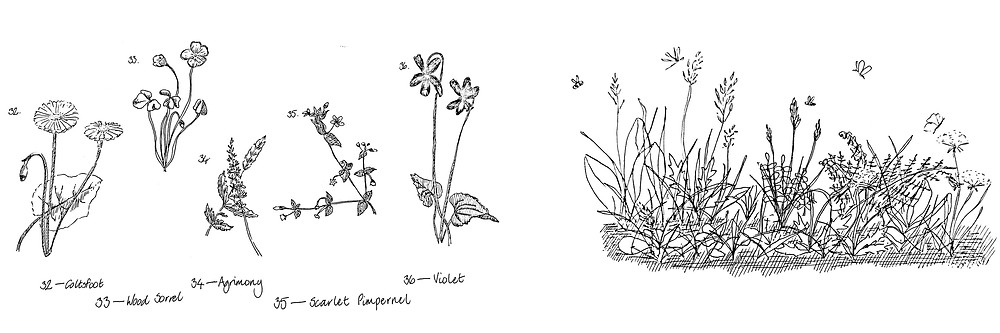 Hand drawn botantical plants - isolated and classified flowers compared to abundant and interconnected ecosystem