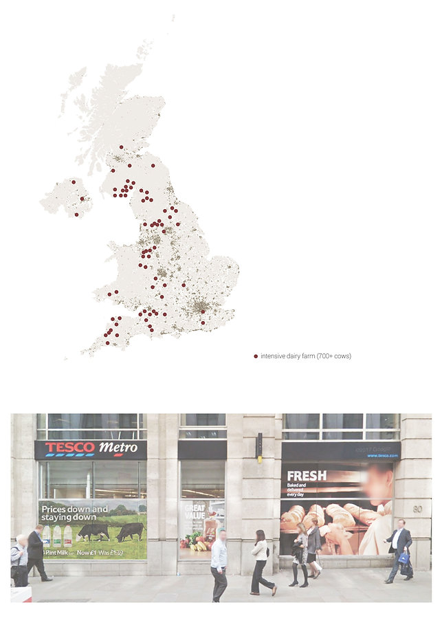 Shop window advertises local milk in central London. Map of United Kingdom with locations of intensive dairy farms