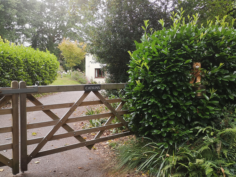 entrance to house named catkins via front gates and green hedge. Stuffed toy cat on sign