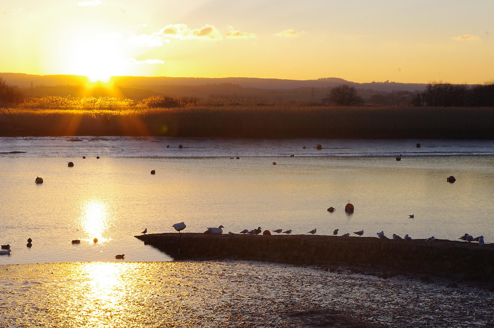 sunset over Topsham Estuary - liminal ecotope where a rich habitat thrives