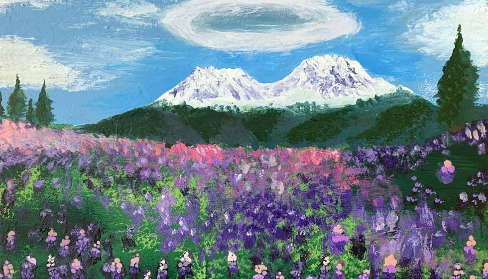 MOUNT SHASTA MEADOW