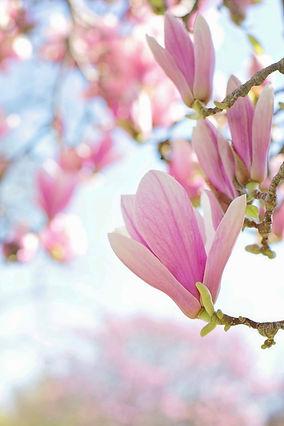 Afscheidskamer Magnolia