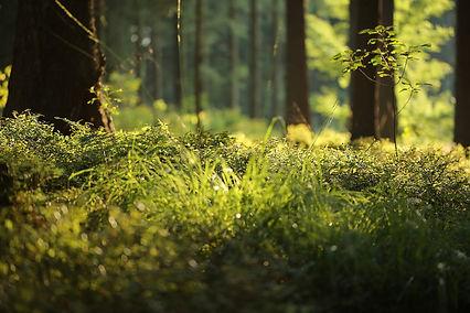 forest-floor-4700814_1920.jpg