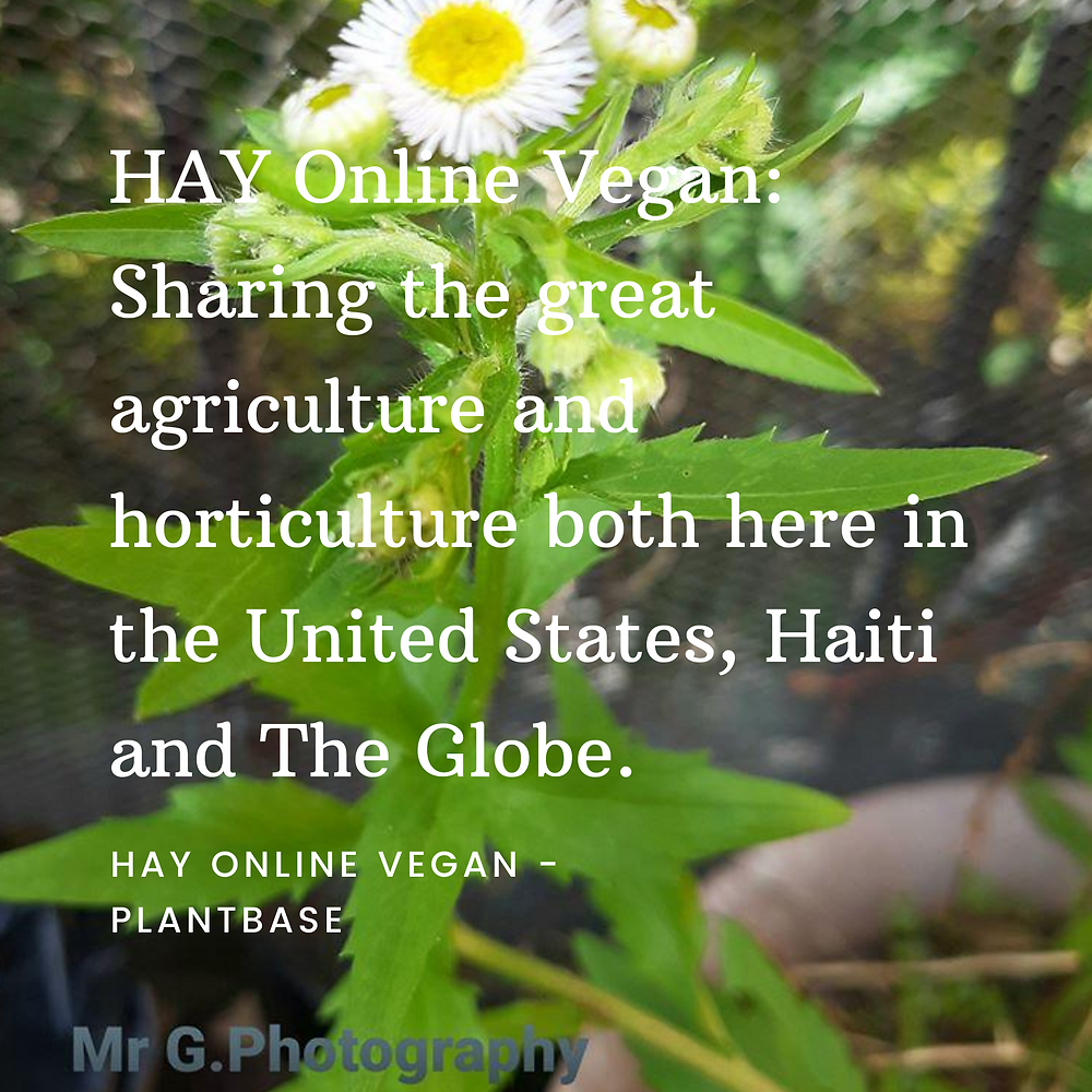 HAY Online News | Agriculture, Horticulture And Veganism | Vegan Life