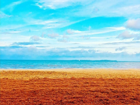 HAY Online News: Sargassum, Brown Algae Piling Up In The Caribbean Like In Les Cayes
