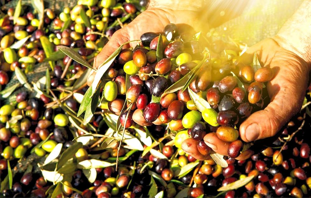 Morocco fruit oil