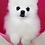 Thumbnail: Сияющая белизна 4000 мл. (Brightening Whitening) шампунь для собак и кошек