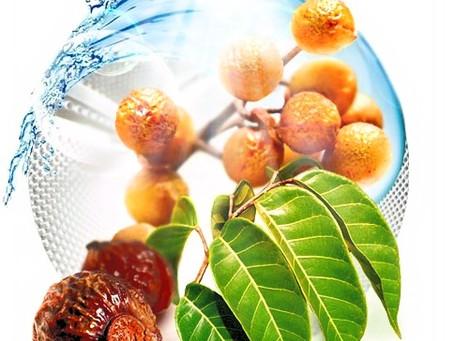 Sapindus Saponin - экстракт из плодов Мыльного дерева в косметологии.
