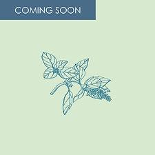 BASIL coming soon-02-02-02.jpg
